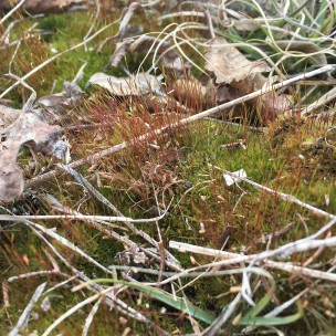cropped moss