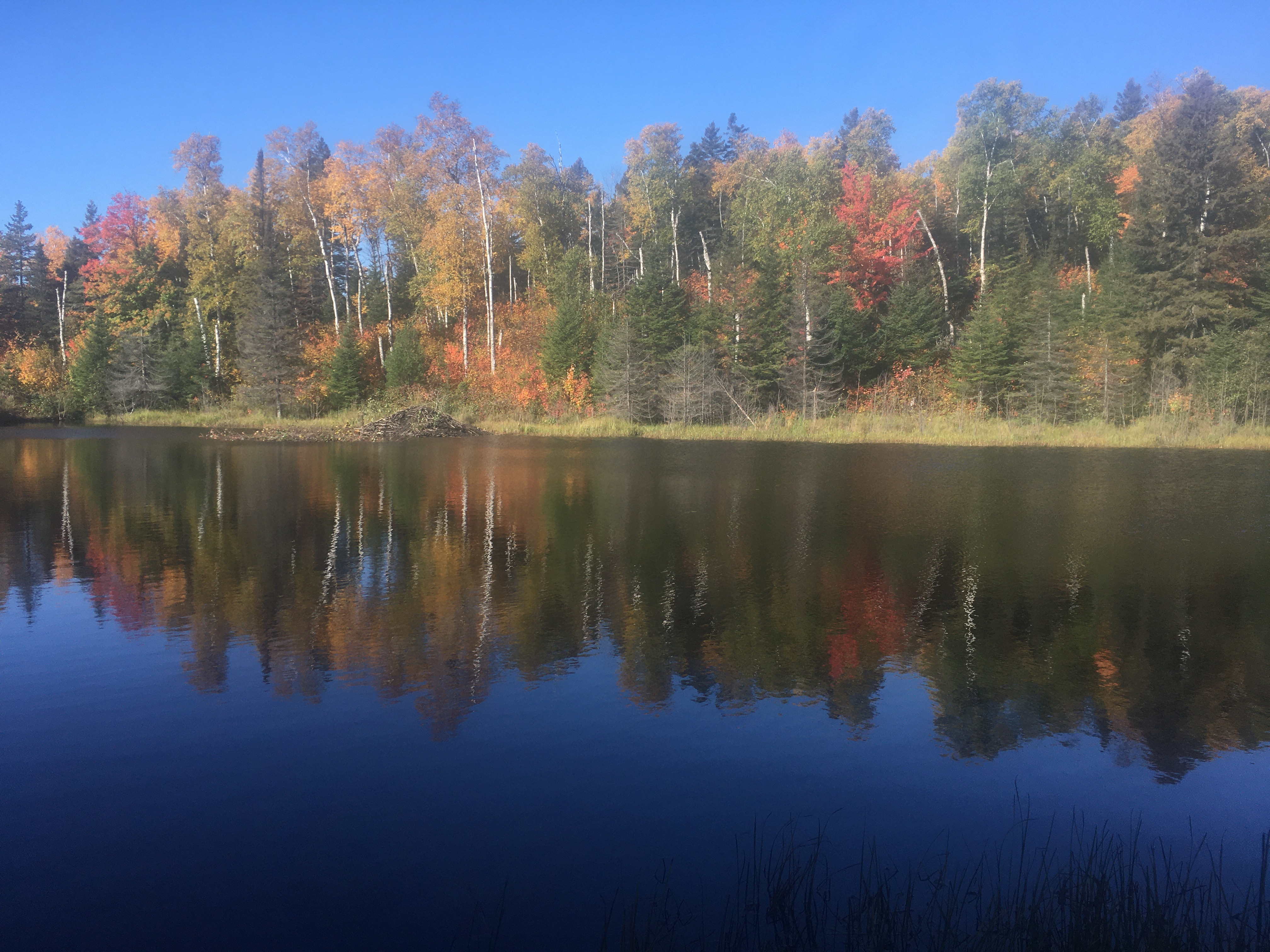 A pond lined with changing fall leaves.