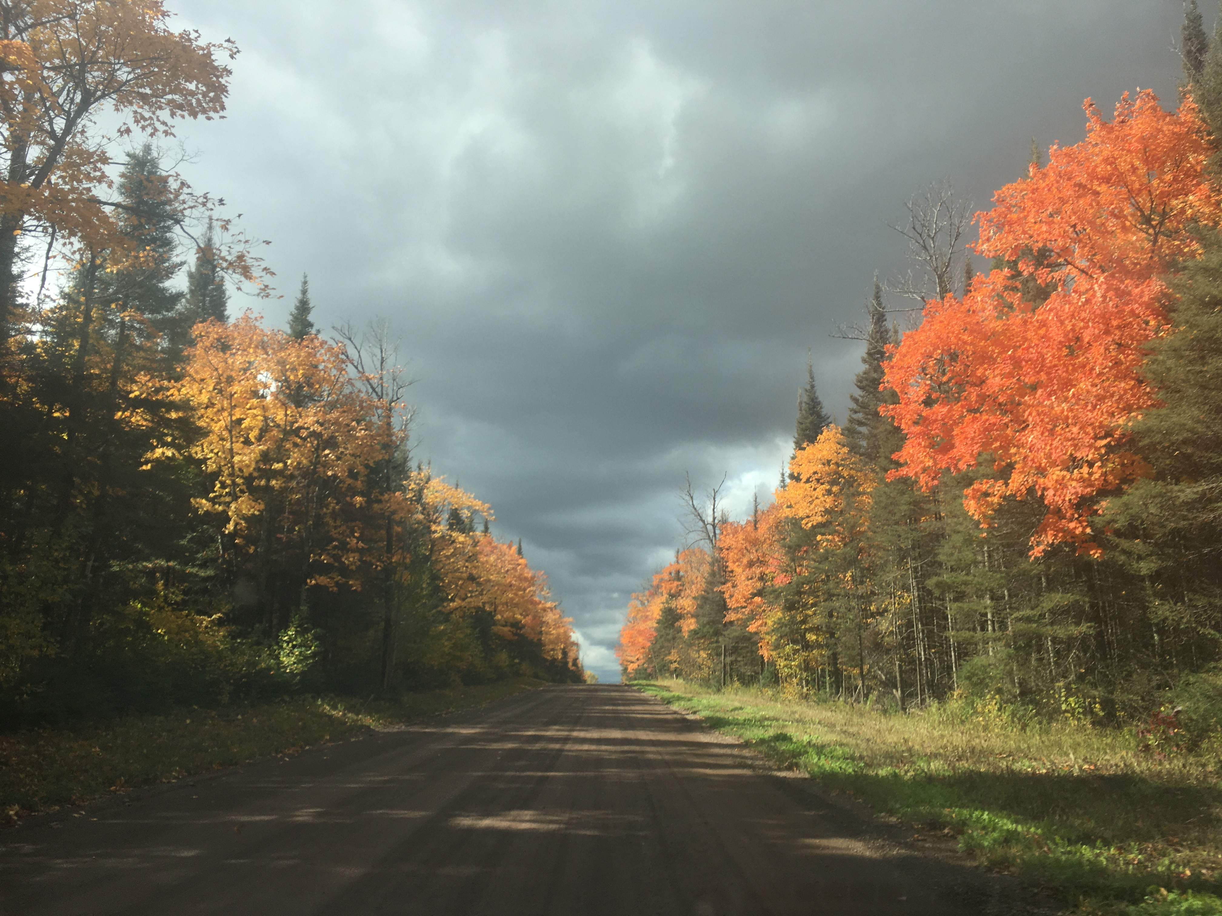 A gravel road lined with changing fall leaves.