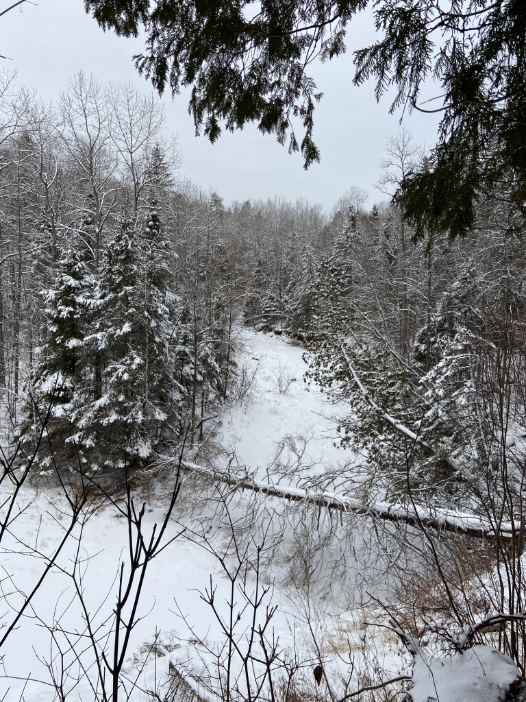 a snowy creek lined by snow covered pines