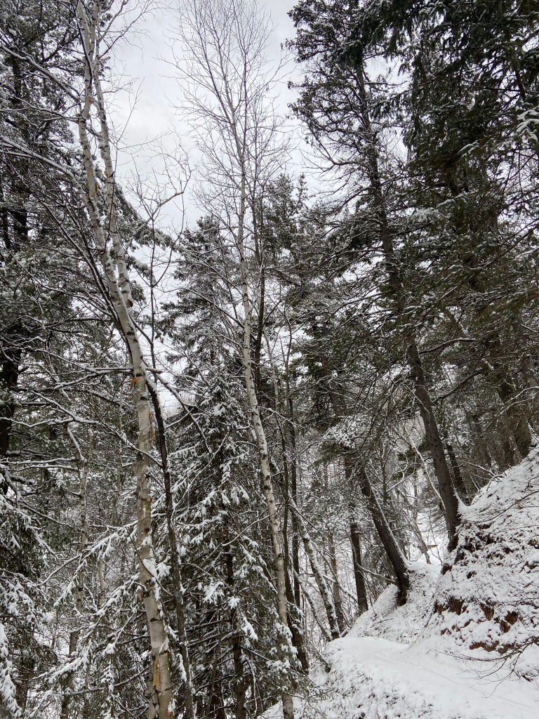 a trail hugging the side of a steep hill, surrounded by pines covered in snow.
